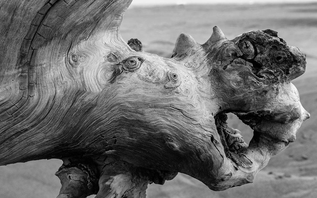 Lo que deja el mar: Retrato de seres imaginarios moldeados por el poder del Ebro