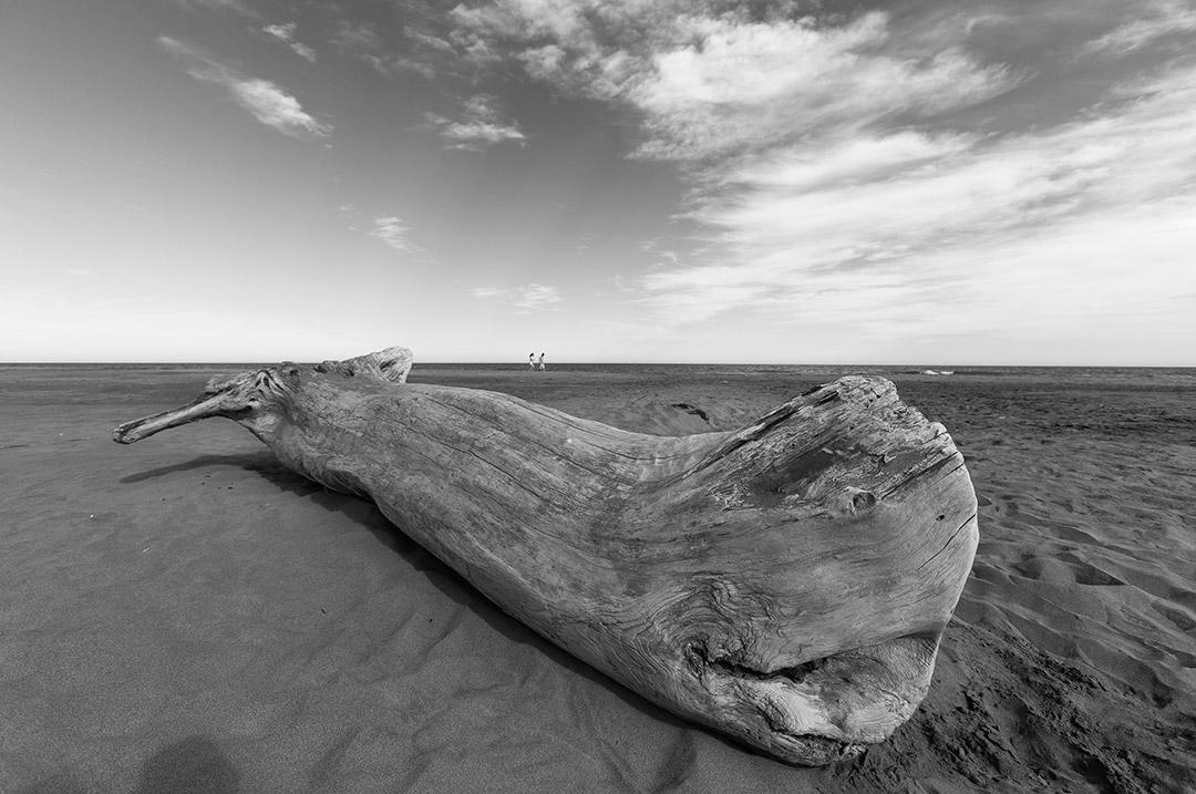 lo que deja el mar